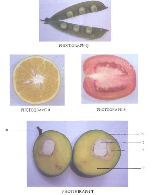 Sections Plants KCSE 2010 BIO P3 Q3