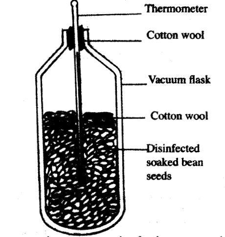 Seeds in Vacuum Flask