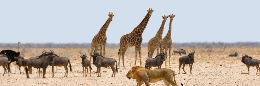 Informative Speech Topics about Animals